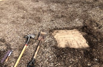 Removed mulch before sampling soil